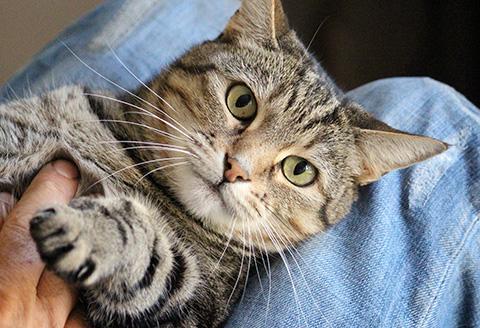 Devenir famille d'accueil de chats pour sociabilisation